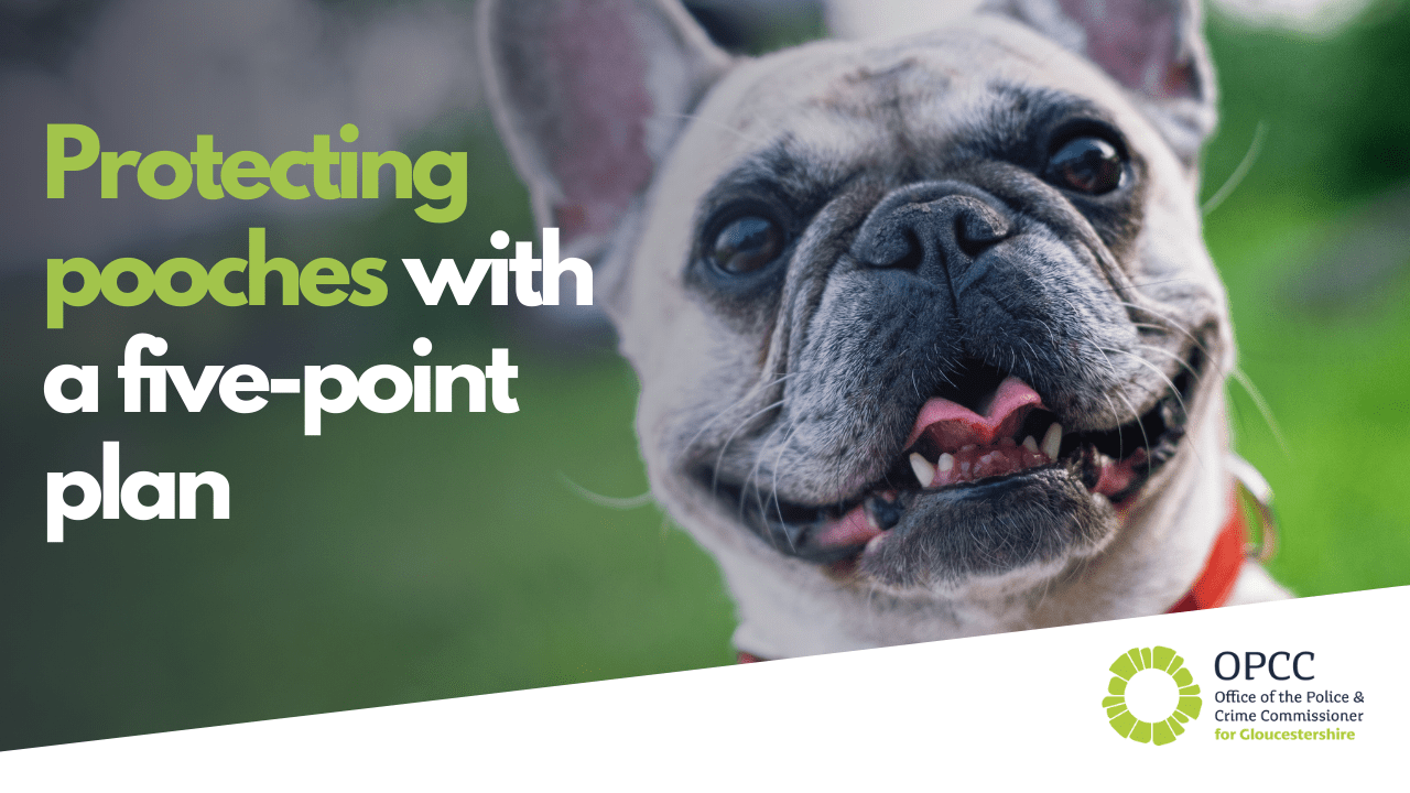 Protecting pooches with a five-point plan